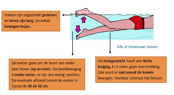 Aandachtspunten borstcrawl benen